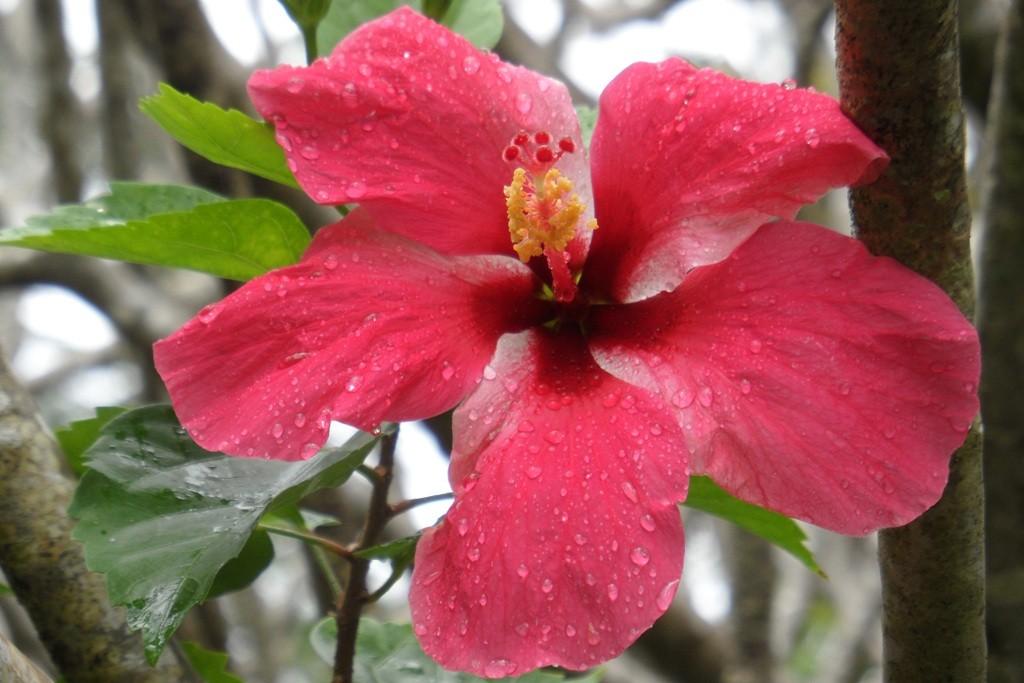Das Pendant dazu, wunderschön blühende Flora!