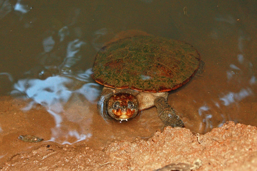 Schildkröten, Schildkröten und noch einmal Schildkröten!