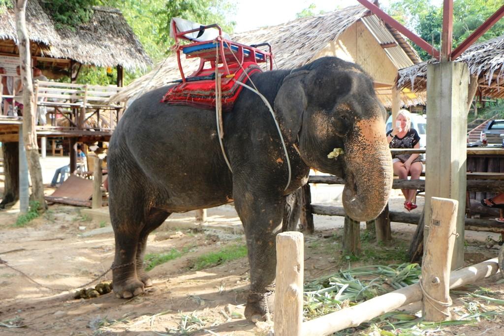 Ciao Wappentier Thailands, für uns ist heute ein erlebnisreicher Tag zu Ende!