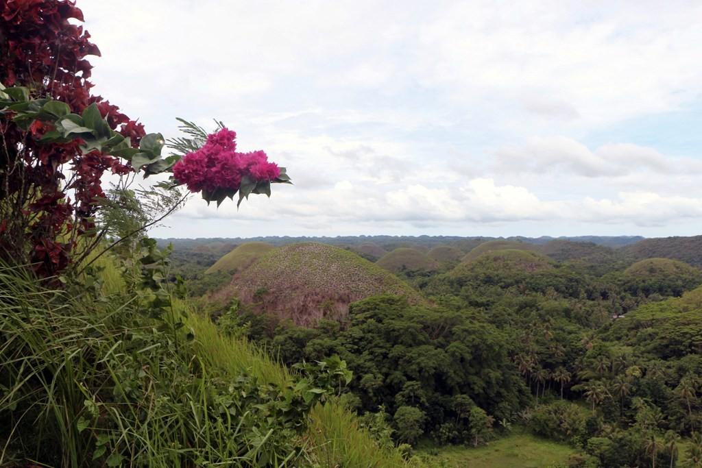 Fotografische Impressionen von den Chocolate Hills, wir sind zu zeitig hier um sie braun gefärbt zu erleben!
