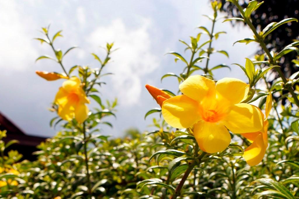 Uns begeistert hier die üppige Flora, alles spriest, kein Wunder bei der feuchten Wärme hier!
