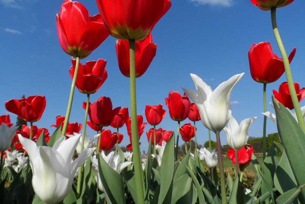 ...und nocheinmal Blütenzauber im Schlossgarten