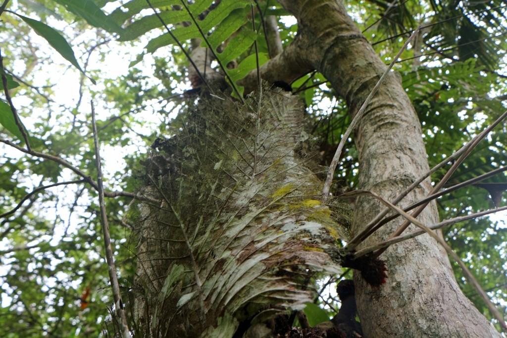 Eine Flora begegnet einem hier, das ist schon bemerkenswert und verdammt interessant!