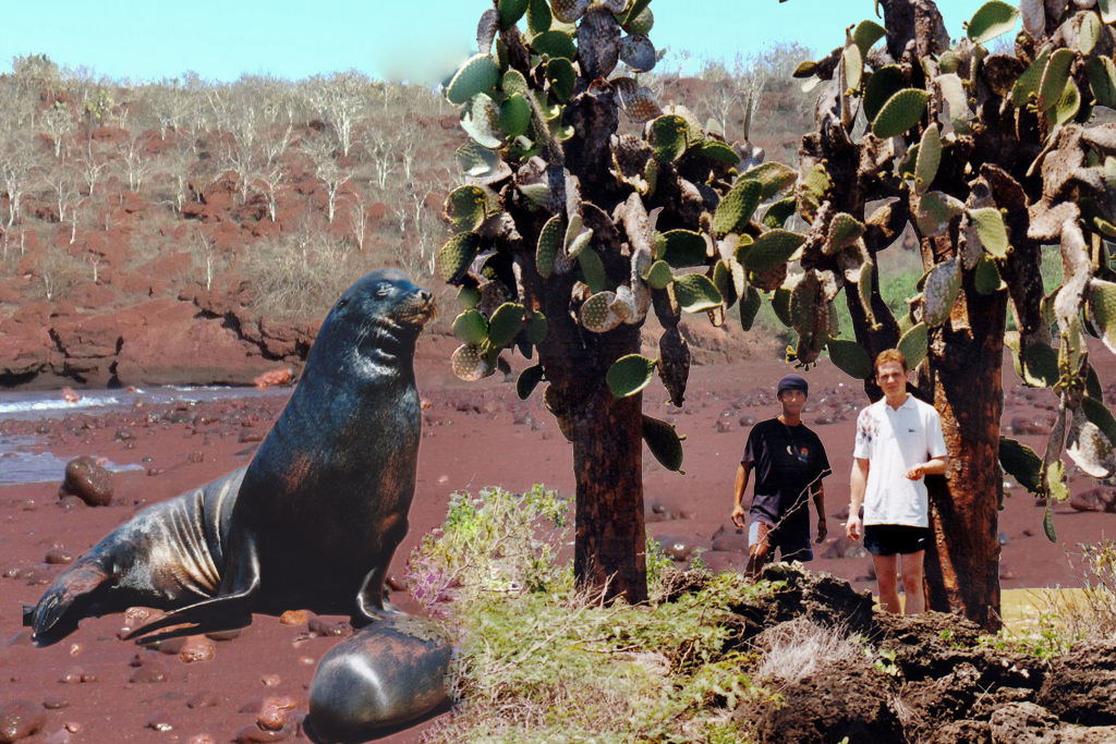 """Seelöwe auf Rabida Island. Die eisenoxidhaltige Lava Asche färbt die """"Insel"""" rot ein. Die mächtigen Baumopuntien gibt es nicht nur auf dieser Insel"""