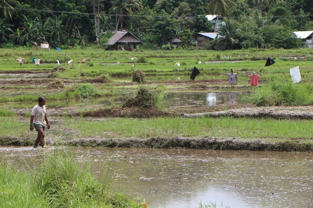 Reisfelder, Reisfelder und noch einmal.....!