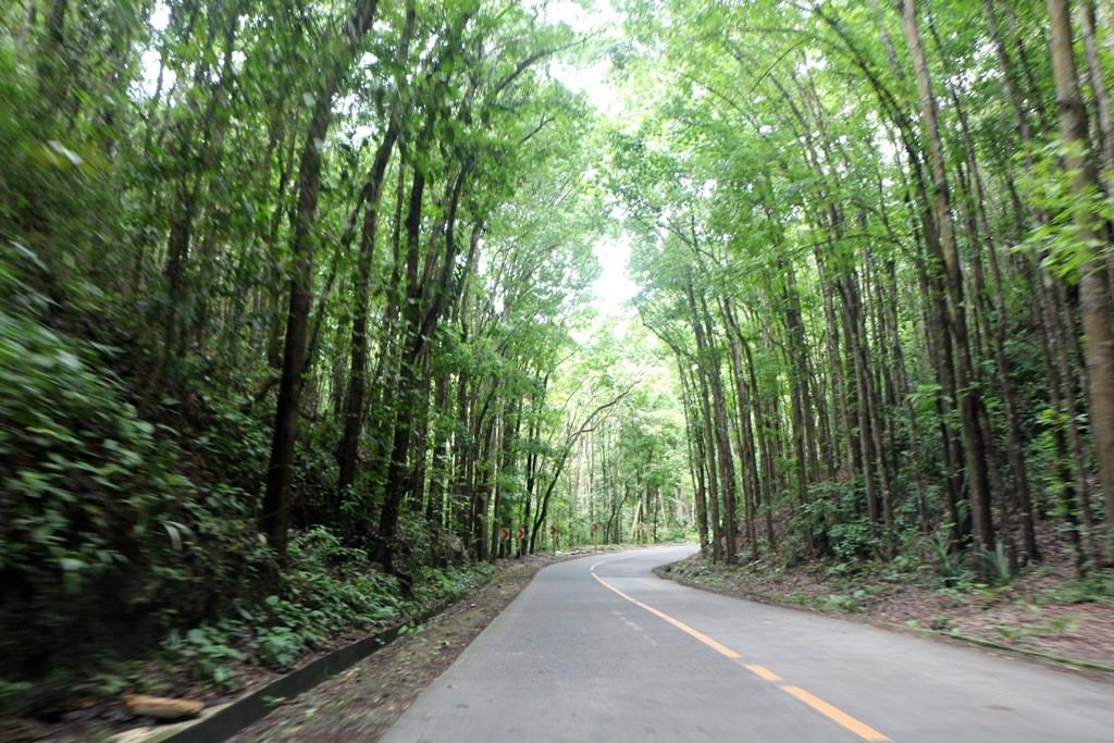 Wir durchfahren jahrhunderte alte Mahagoniwälder in der Nähe von Carmen