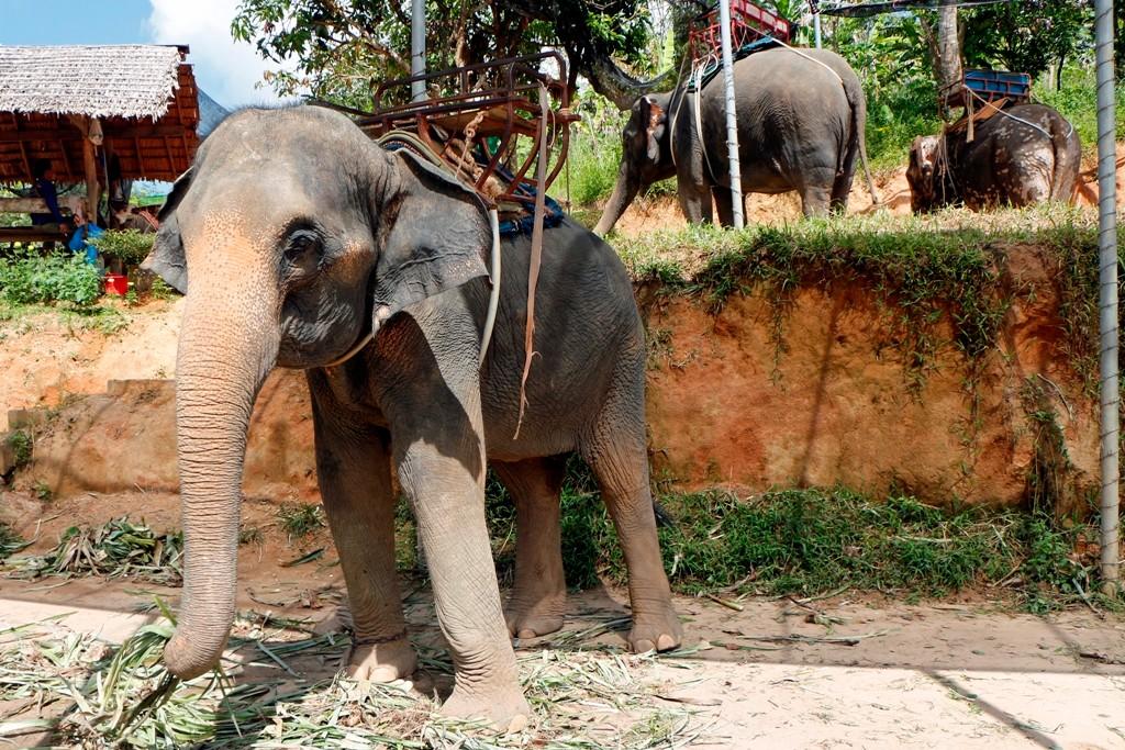 Unterwegs auf der Abfahrt eine Station für Elefanten Safari´s