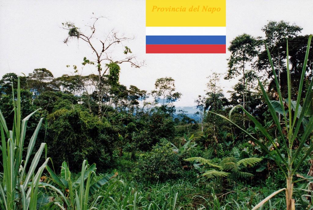 Wir sind im Oriente, im Regenwald des Amazonasbeckens angekommen
