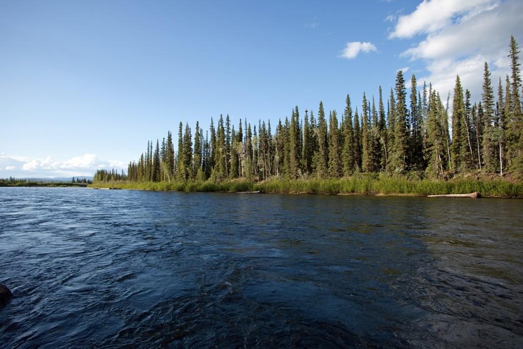 "Der Klondike River, der zu Zeiten des größten Goldrausches (1896 - 1898) in Nordamerika den Namen ""Goldrausch am Klondike"" gab"