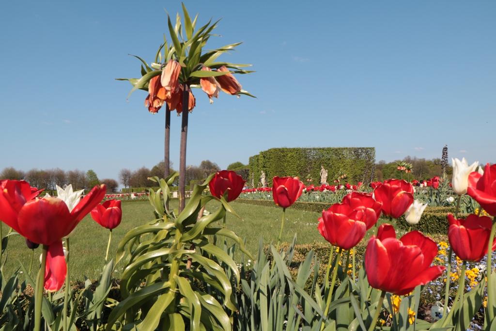 ...die Blütenwelt verzaubert regelrecht!