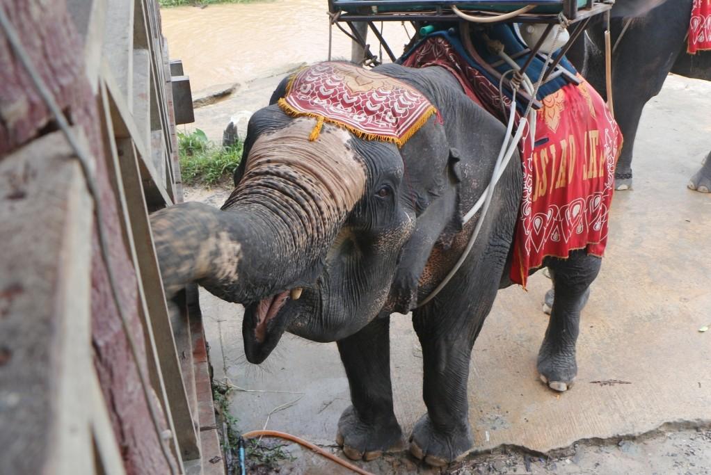 Die Elefanten nehmen dankend all das, was ihnen gereichjt wird, nur kaufen muss man es zuvor!