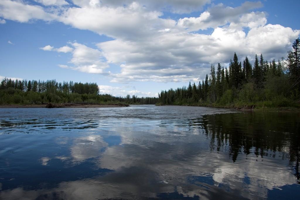 """Der etwas seicht daher kommende Klondike River, mit nur 161 Km ein """"Winzling"""" unter den Flüssen im Norden."""