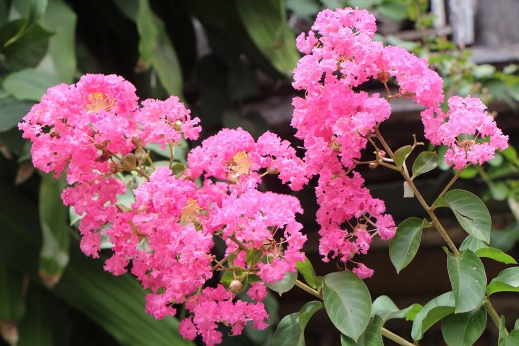 Exotische Blütenpracht!