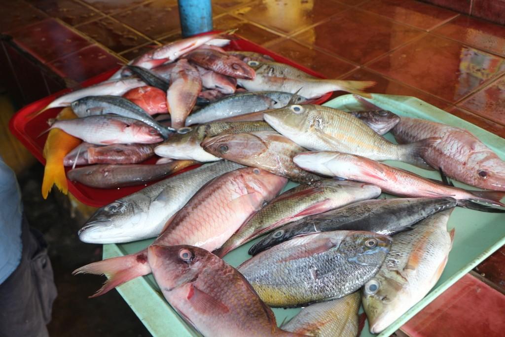 Frischfisch in bester Qualität, davon konnten wir uns mehrfach überzeugen!