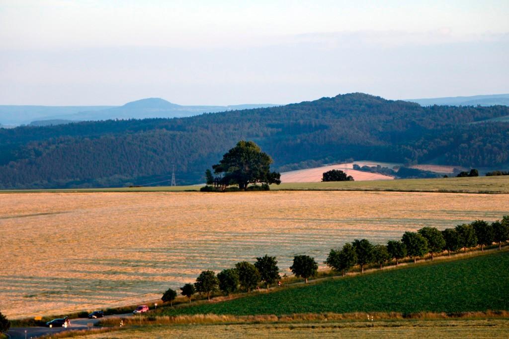 Vor uns die historische, 17,3 m hohe Babisnauer Pappel (Schwarz Pappel, 330 m ü.d.M.) wurde 1808 als Grenzbaum gepflanzt, im Hintergrund die Bergen des Osterzgebirges