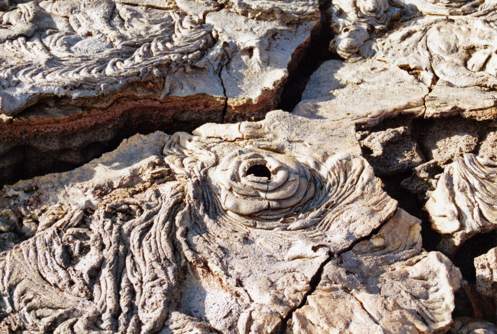 Detailaufnahme eines jungen Lavafeldes