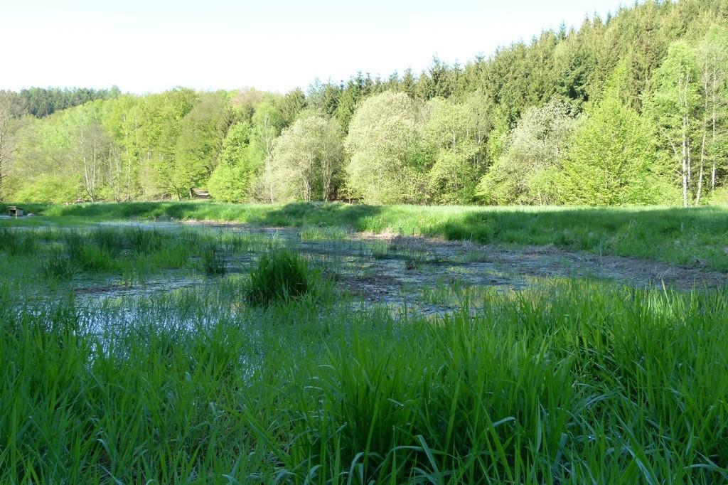 Saftiges Grün entlang der Polenz