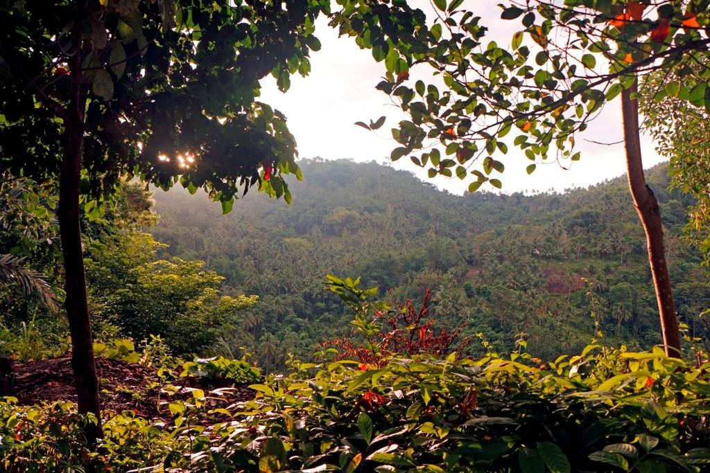 ...die Abendsonne taucht den Regenwald in goldgelbes Licht!