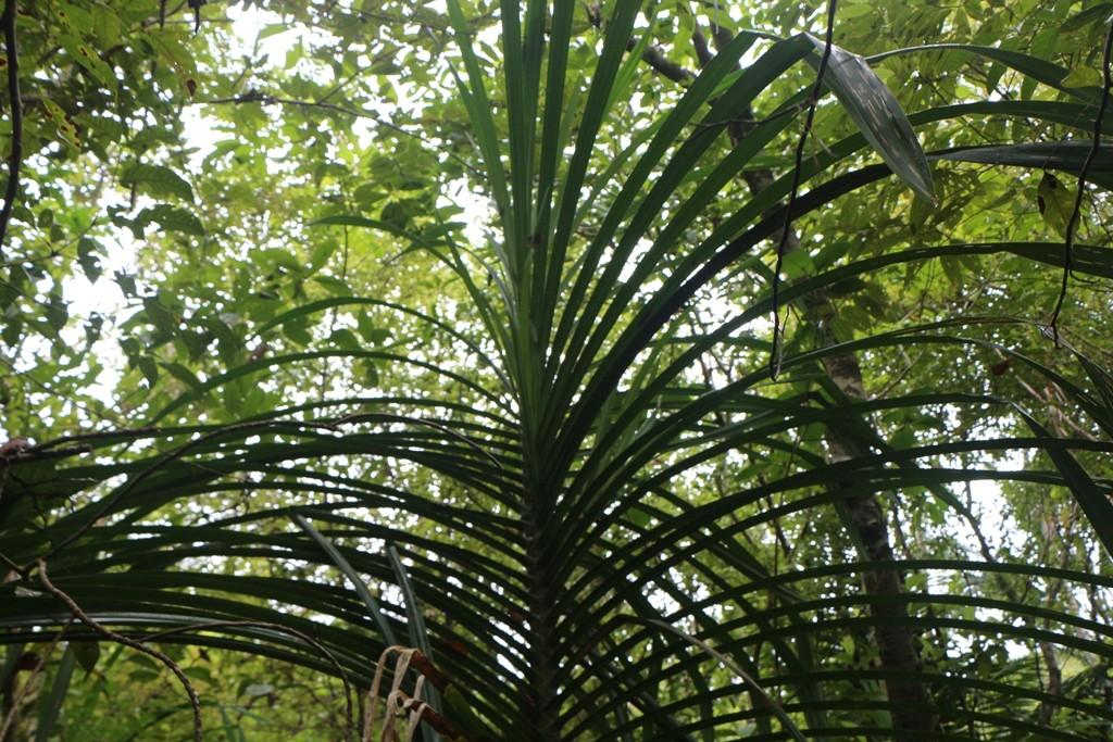Ringsherum der dichte, tropische Regenwald