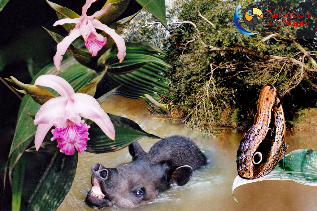 Orchidee Sobralia, südamerikanischer Tapir, Bananenfalter