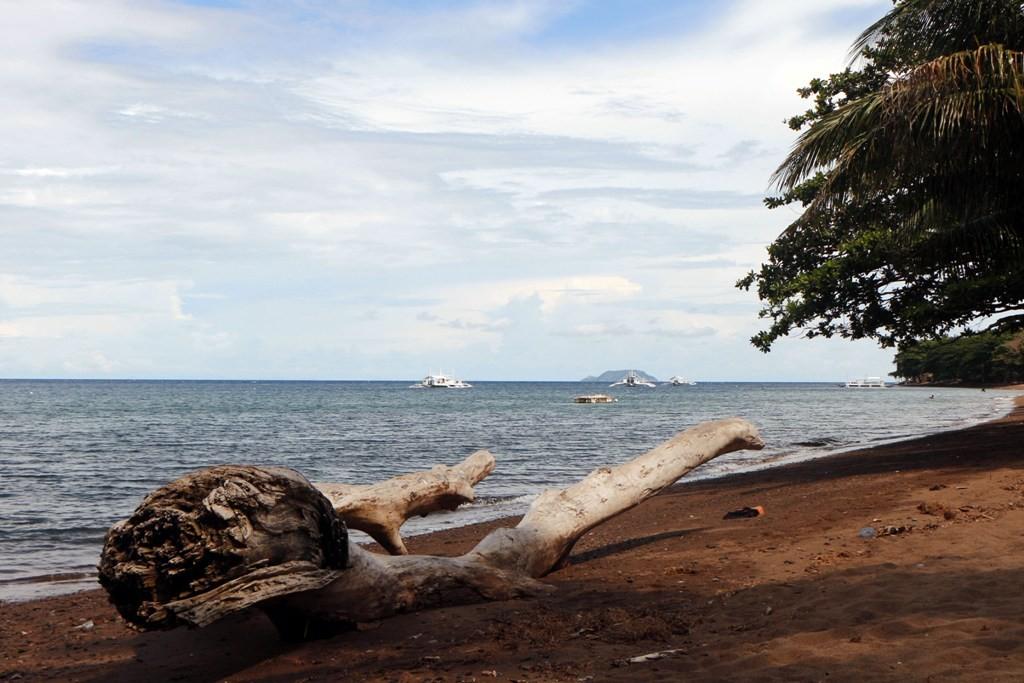 """Von der Natur drapiert, """"Holzkunst"""" am Strand nördlich von Dauin."""