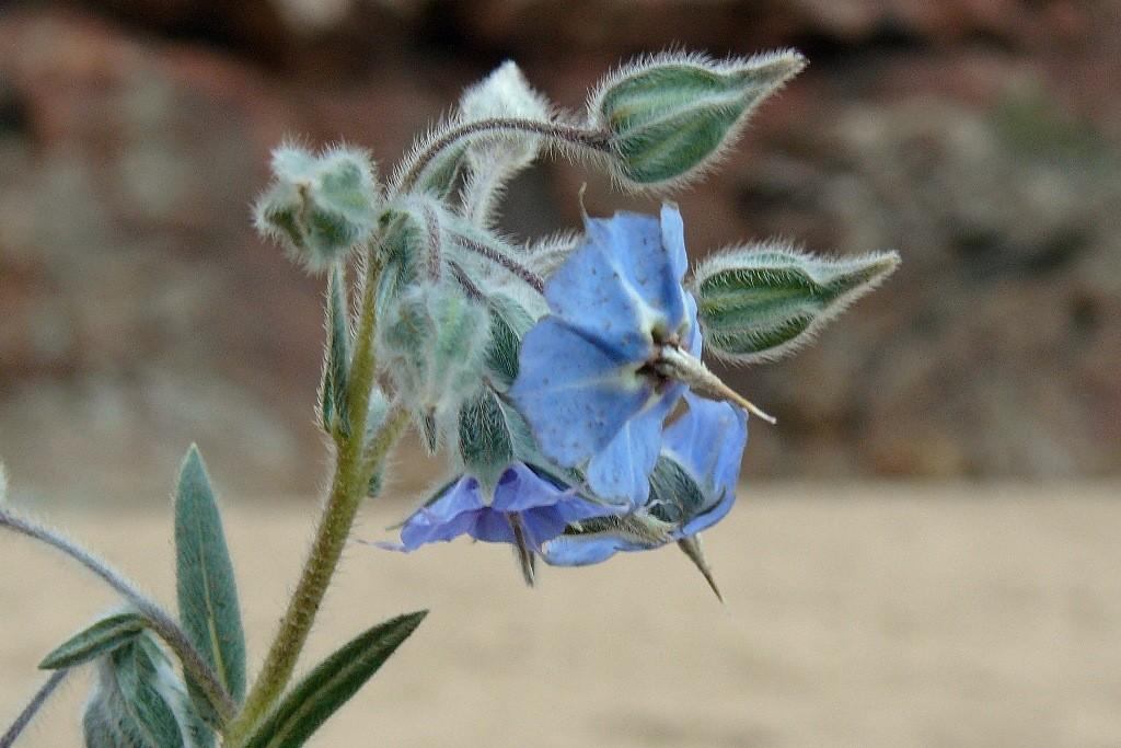 Eine bemerkenswerte Flora rings umher!