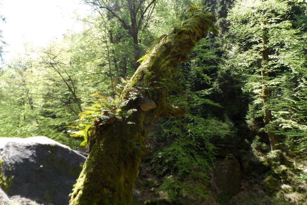 ...die Natur in unverfälschtem Antlitz