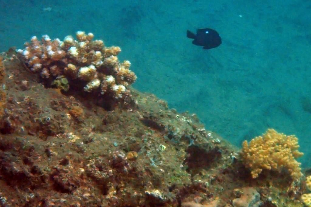 Und das sind die bescheidenen Ergebnisse meiner ersten Unterwasserfotos!
