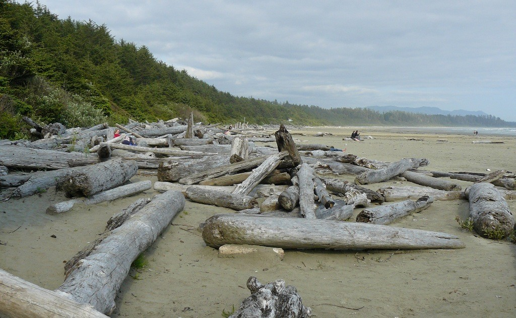 Driftwood in Massen am Strand der Cox Bay