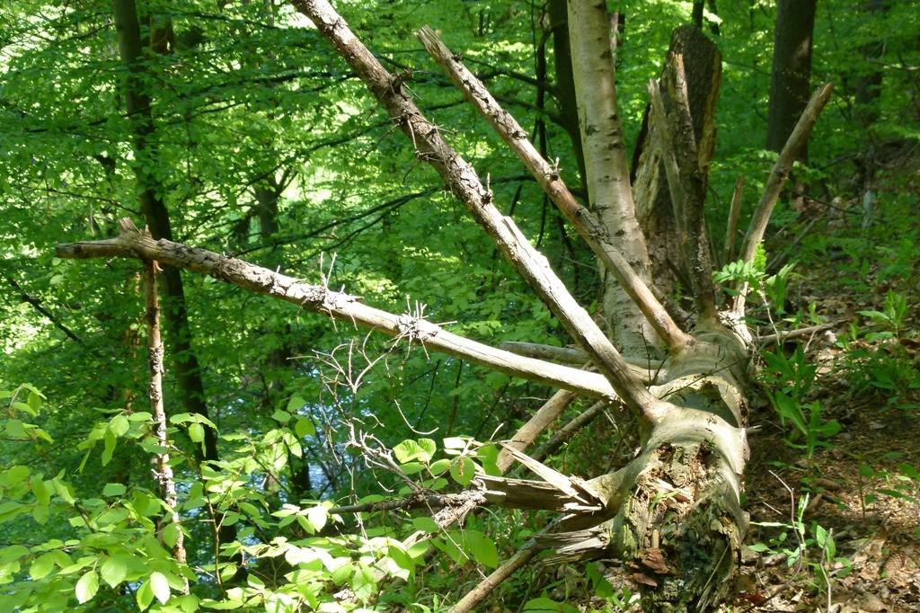 Selbst ein abgestorbener und entwurzelter Baum ist noch fotogen....