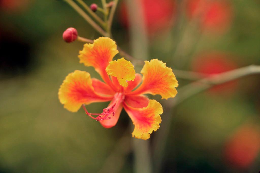 Anmut und Schönheit dieser Orchidee, was will des Touristen Herz mehr?