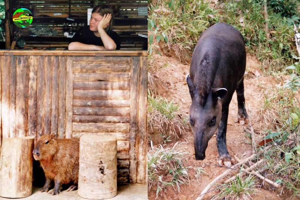 Wasserschwein und Andentapir