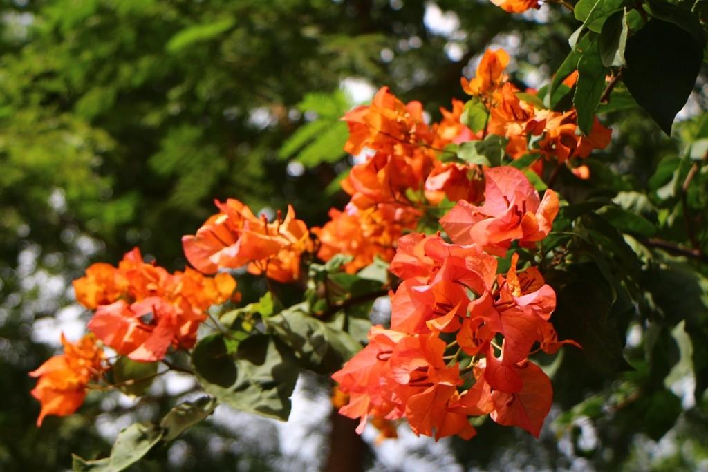 ...und gleich nebenan, Blütenzauber