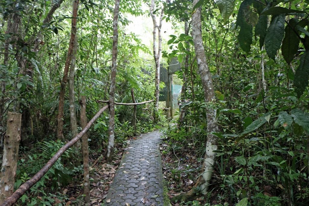Der Weg zu den Reservationen, in welchen die Tarsier auf den Bäumen leben!