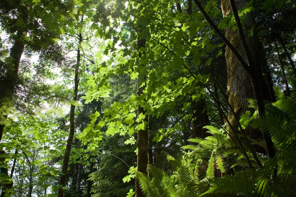 Regenwaldzone nahe Tofino, Vancouver Island