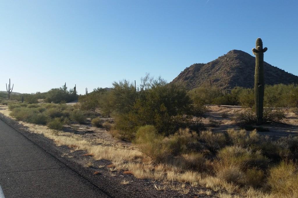 Die Sonoran Desert zieht uns in ihren Bann!