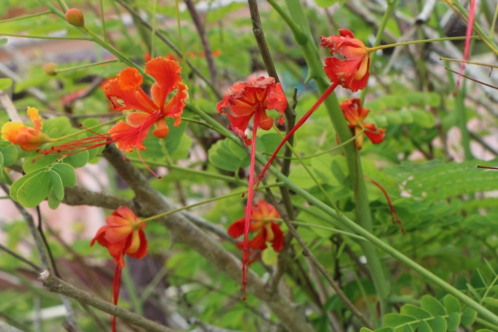 Exotische Flora rings umher!