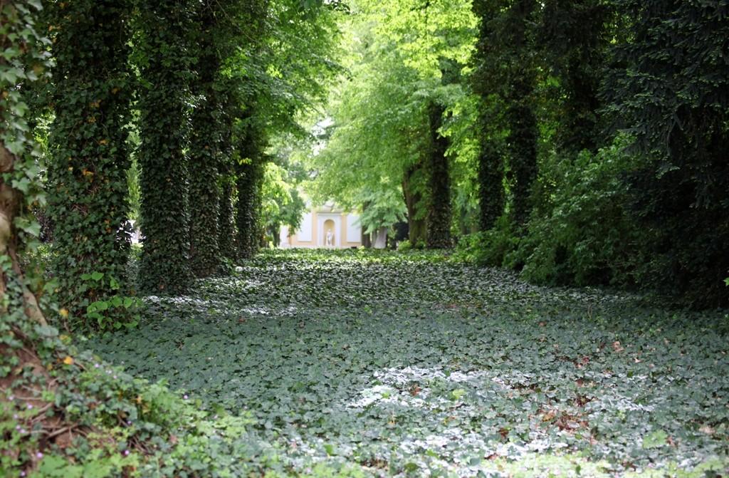 Typisch für den Wörlitzer Park, die weitläufigen Sichtachsen!