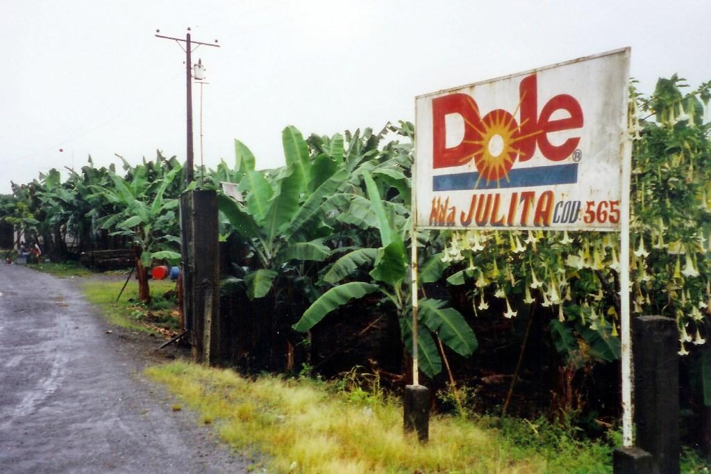 Riesige Bananenplantagen bei Naranjal