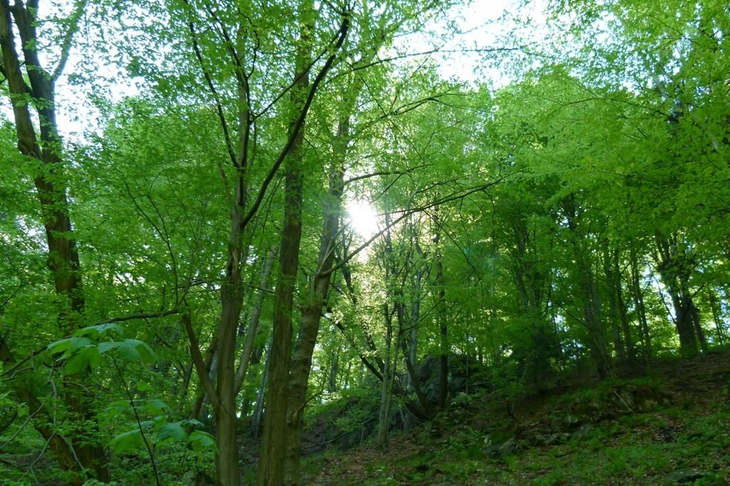 Die Sonne lugt durch das dichte Blattwerk am Wegesrand
