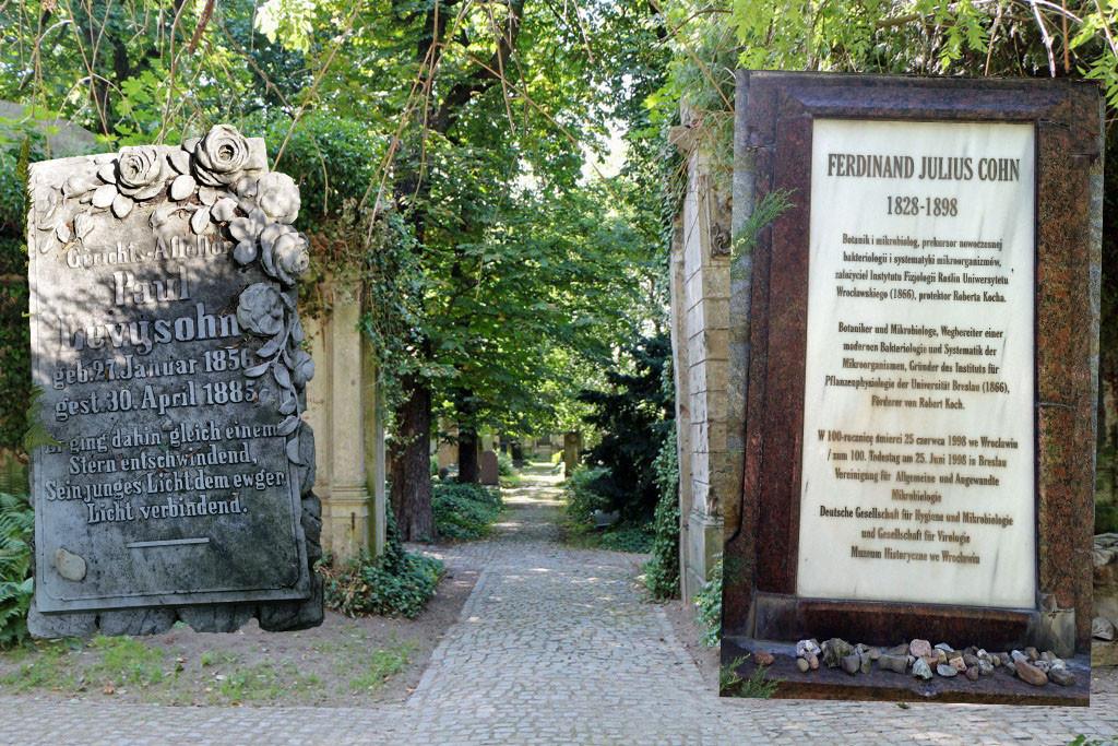 Alleen teilen den quadratischen Friedhof, der durch die vielen Bäume ausgesprochen grün wirkt. Die erste Bestattung gab es im November 1856, die letzten Begräbnisse zwischen 1940 und 1942, im Jahr darauf wurde der Friedhof geschlossen.