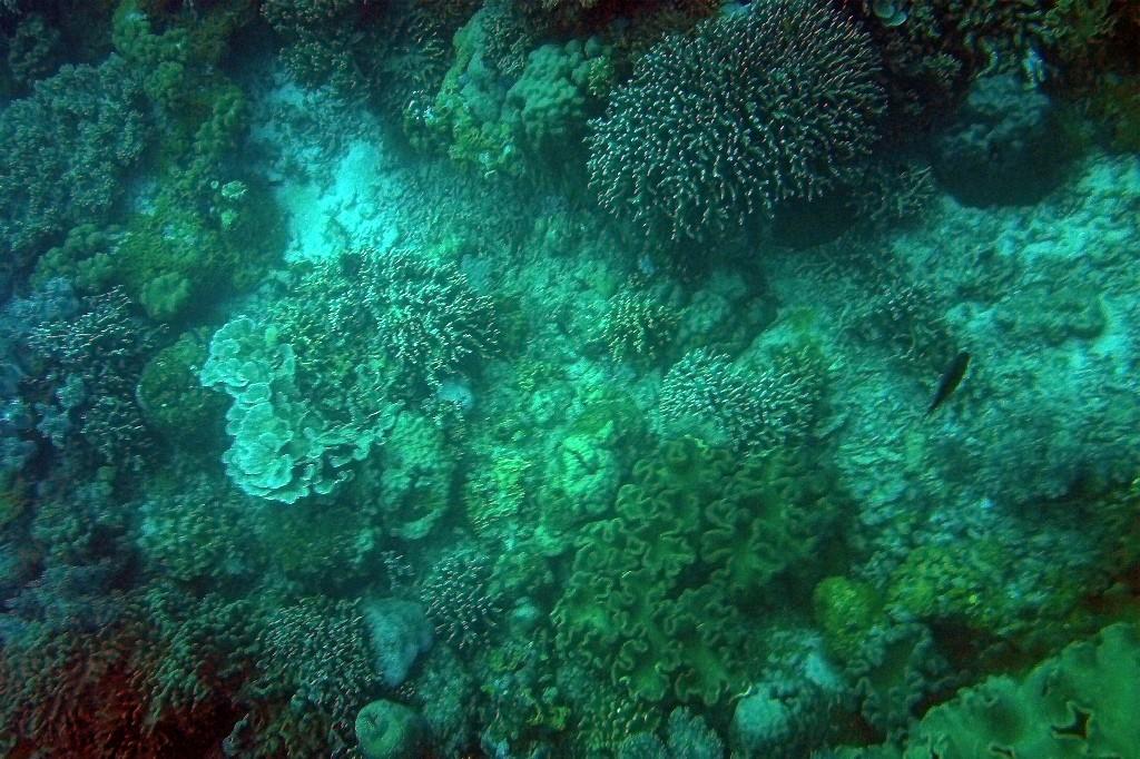 Impressionen der Unterwasserwelt vor Apo Island!