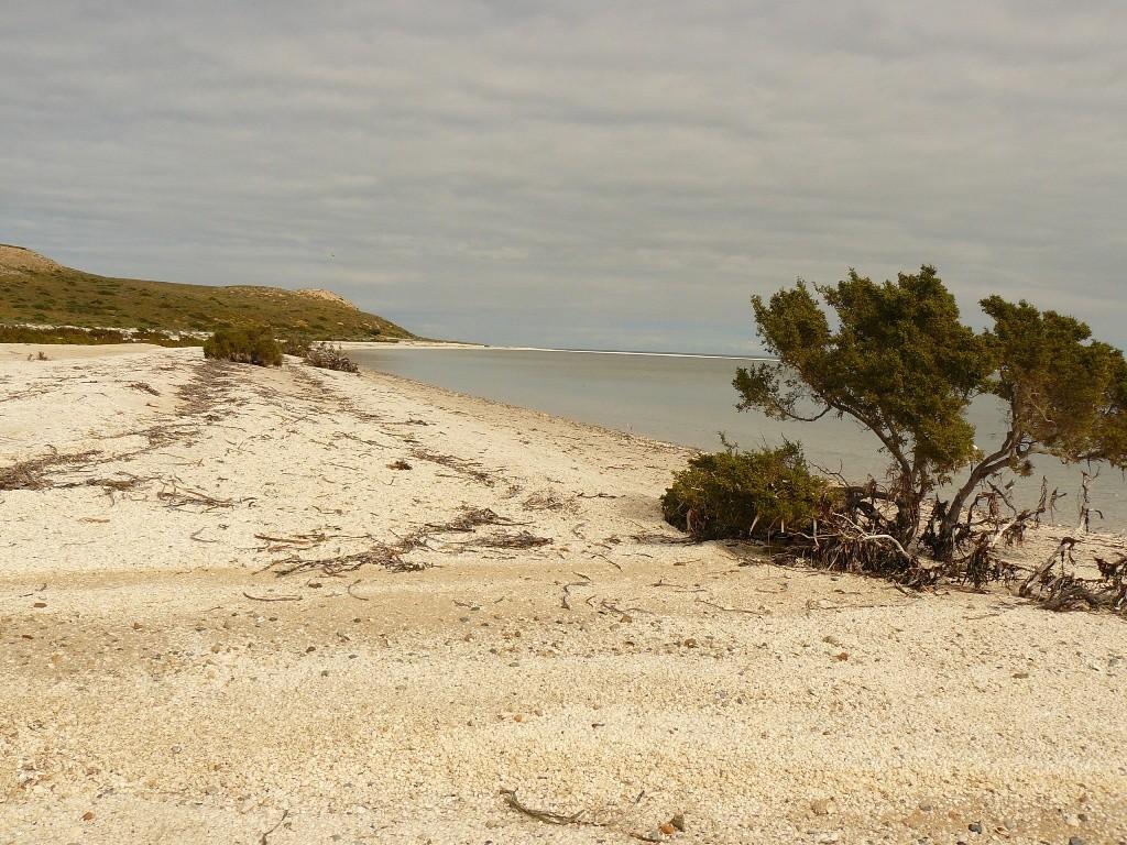 Den North West Costal HWY weiter nach Norden und dann rechts in die Shark Bay Road zur Shark Bay und weiter nach Denham