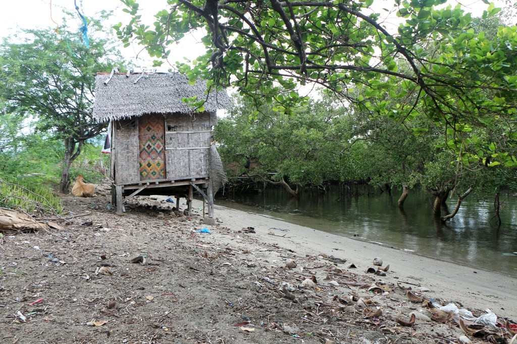 Eine Payag Payag am Mangroven Ufer der Tanon Strait