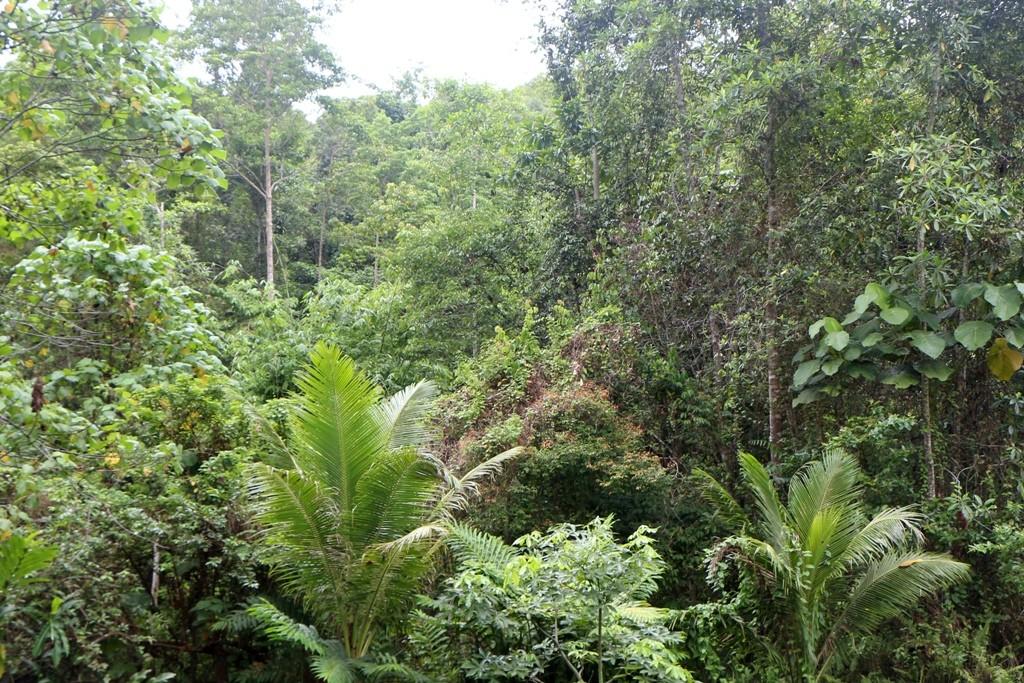 Hier ist der Tarsier zu Hause im tropischen Regenwald von Bohol