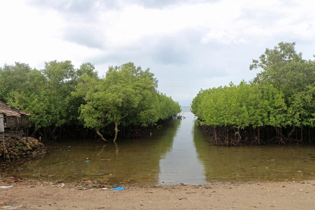 Der Mangrovenwald an der Tanon Strait um Hintergrund