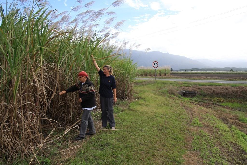 Zuckerrohrplantagen riesigen Ausmaßes an der Mossmam-Daintree Road