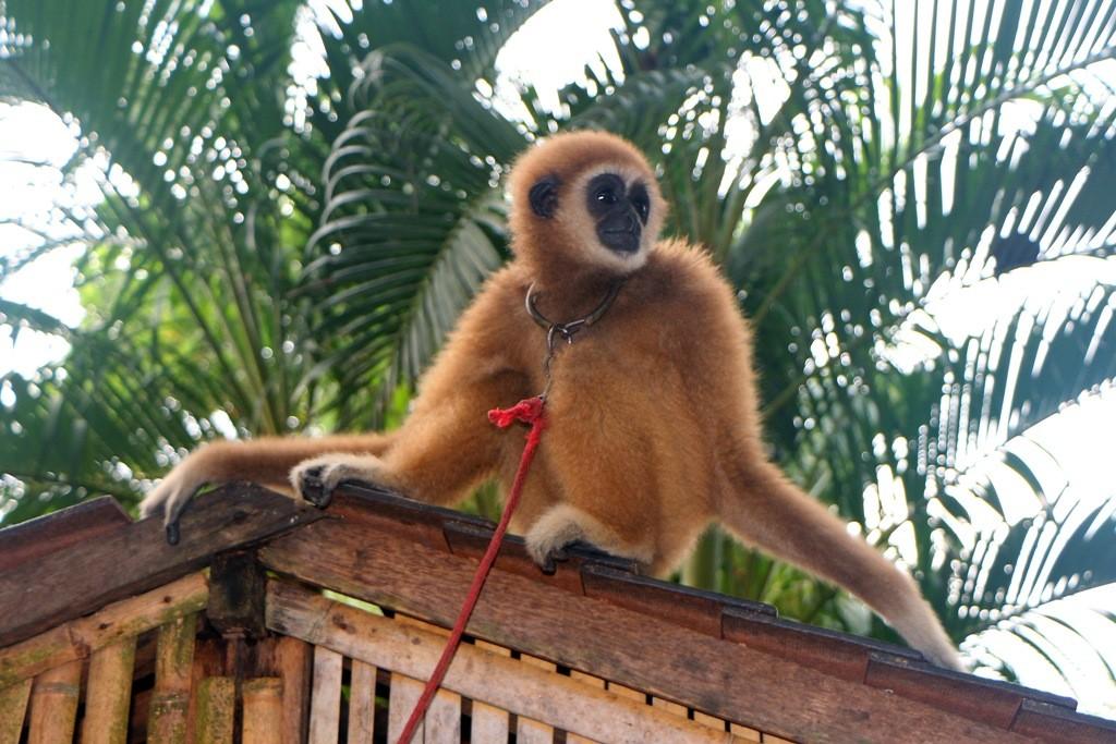 Reminiszenzen über das Affenleben hier in Safari Island...