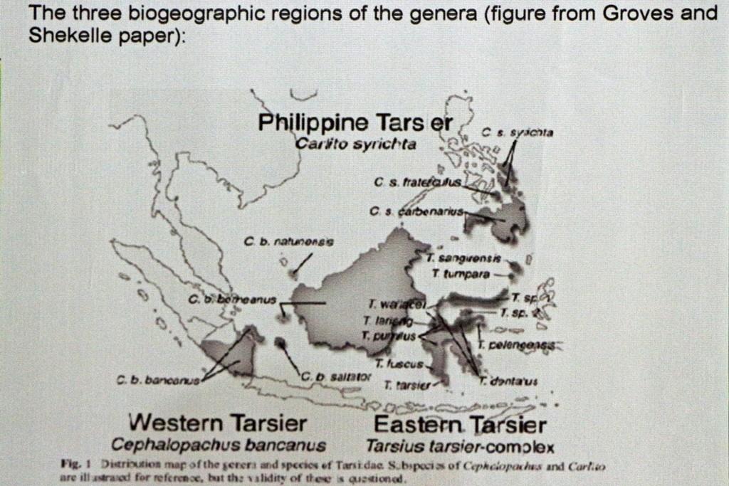 Das ist die Karte mit den Verbreitungsgebieten der Tarsier im südostasiatischen Raum!
