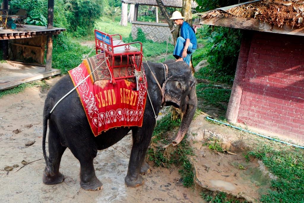 Unser Weg führt uns direkt zur Elefantensafari - wir werden vom Dickhäuter durch ein kleines Flussbett getragen!